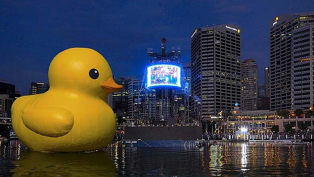 Duck in Sydney Harbour